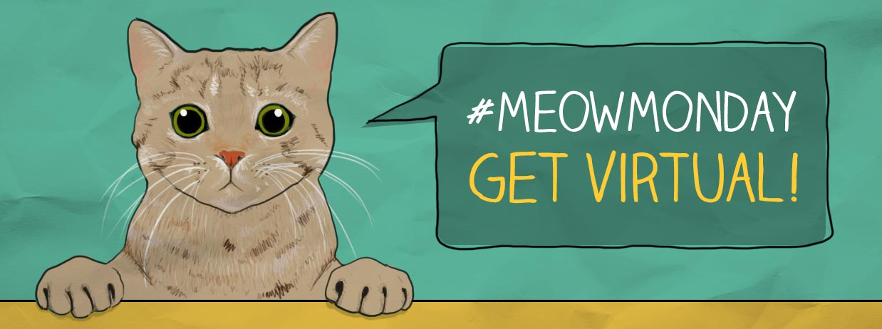 #MeowMonday: Post your pet pics on Instagram | March 30